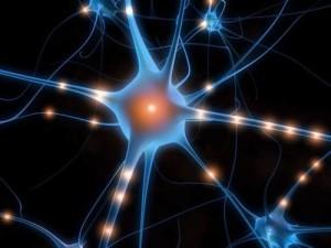 modello mente neuroni specchio